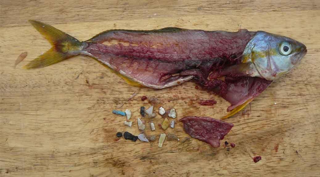 Alimenti nocivi, Coldiretti: ecco i 15 cibi più pericolosi per la salute