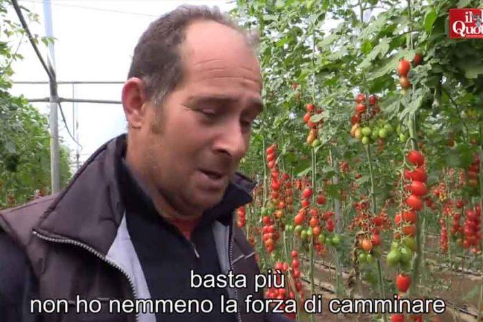 Il dramma del pomodoro di Pachino, schiacciato dai trattati Ue