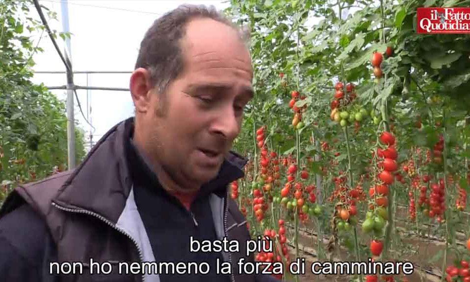 pomodoro-di-pachino